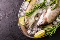 Seafood. Two raw rainbow trouts marinated with lime, rosemary. Seafood. Two raw rainbow trouts marinated with lime, peper, spices and rosemary on metal tray and stock images