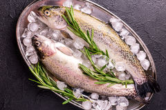 Seafood. Two raw rainbow trouts marinated with lime, rosemary. Seafood. Two raw rainbow trouts marinated with lime, peper, spices and rosemary on metal tray and royalty free stock images