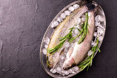 Seafood. Two raw rainbow trouts marinated with lime, rosemary. Seafood. Two raw rainbow trouts marinated with lime, peper, spices and rosemary on metal tray and royalty free stock photos