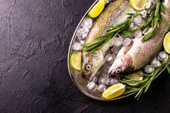 Seafood. Two raw rainbow trouts marinated with lime, rosemary. Seafood. Two raw rainbow trouts marinated with lime, peper, spices and rosemary on metal tray and royalty free stock image