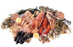 Seafood. Various seafood in front of white background Stock Images