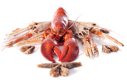 Seafood. Various seafood in front of white background Royalty Free Stock Image