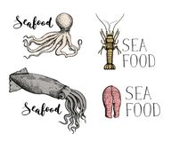Seafood vintage hand drawn icon set. Octopus, shrimp, squid and fish steak sketches for restaurant menu or market advertising. Natural healthy food lettering Royalty Free Stock Photo