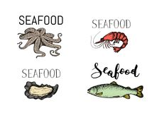 Seafood vintage hand drawn icon set. Oyster, shrimp, octopus and rainbow trout sketches for restaurant menu. Natural healthy food lettering elements vector Stock Image