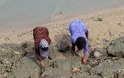 Seafood. Women gathering shells asia Royalty Free Stock Photos