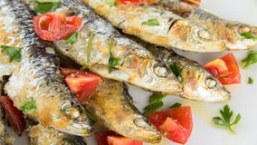 Seafood for you! Bon Appetit! Royalty Free Stock Photo