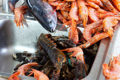 Seafoods and fish at kitchen sink Stock Image