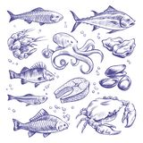 Seafoods hand drawn. Sea fishes oysters mussels lobster squid octopus crabs prawns salmon shellfish natural sea food stock illustration