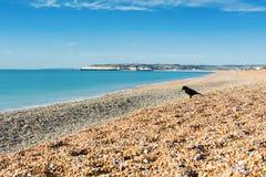 Seaford strand, östliga Sussex england fotografering för bildbyråer
