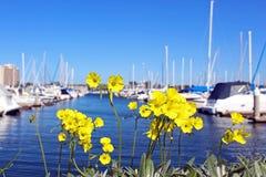 Seaforth Marina Harbor, San Diego, Kalifornien lizenzfreie stockbilder