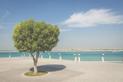 Seafront against the backdrop of Abu Dhabi Stock Photos