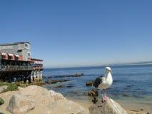 Seagle Stock Foto's
