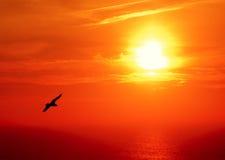 Seagle de coucher du soleil Photographie stock