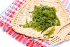 Seagrapes green caviar  seaweed Stock Images