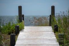 Seagrass σε έναν αμμόλοφο άμμου στοκ φωτογραφίες