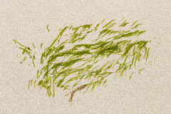 Seagrass Stock Photos