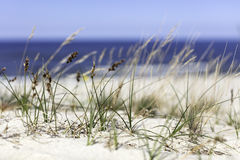 Seagrass on the beach. Seagrass at the beach on the baltic sea Stock Images