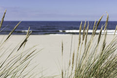 Seagrass on the beach. Seagrass at the beach on the baltic sea Royalty Free Stock Photos