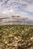 Seagrass and Belize Island Stock Photography