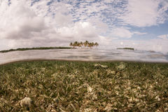 Seagrass and Caribbean Island Stock Photo