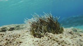 Seagrass decreciente almacen de metraje de vídeo