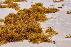 Seagrass Stock Image
