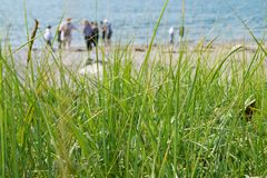 Seagrass at Irving Nature Park, Bay of Fundy, Canada royalty free stock photos