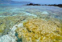 Seagrass near the Elafonisi beach on the island of Crete Royalty Free Stock Images