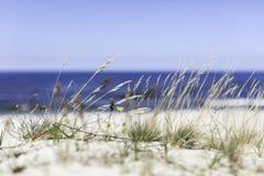 Seagrass op het strand Stock Foto