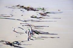 Seagrass pattern on sandy beach Stock Photo
