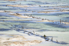 Seagrass plantation detail, Nusa Lembongan, Bali, Indonesia. Seagrass plantation in blue and green detail, Nusa Lembongan, Bali, Indonesia stock photo