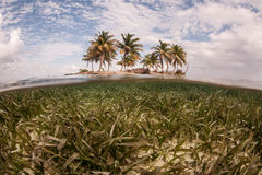 Seagrass and Remote, Tropical Island. A seagrass meadow surrounds a remote tropical island in the Caribbean Sea. Coconut palms grow on the tiny, sand-covered Royalty Free Stock Image