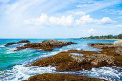 Seagrass on the rock,seaweed on the rock,moss,algae.  Stock Images