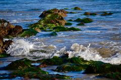 Seagrass on Rocks in Ocean. Green seagrass on the rocks in the ocean at tide pools Stock Photos