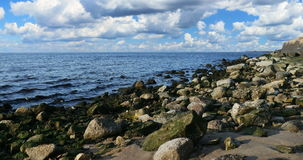 Seagrass on stones at Beach in Latvia stock video