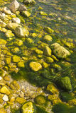 Seagrass. Among the stones from the shore, Romania, Agigea Royalty Free Stock Image