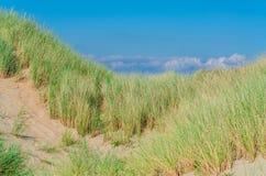 Seagrass-, strand- och sanddyn royaltyfri foto