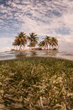 Seagrass and Tropical Island Royalty Free Stock Photo