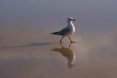 Seagul auf Strand Lizenzfreies Stockfoto