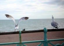 Seagul in Brighton stock afbeeldingen