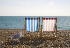 Seagul and Deckchairs, Brighton. Seagul with two deckchairs on Brighton Beach Royalty Free Stock Photos