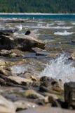 Seagul en las rocas Imagenes de archivo