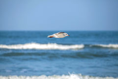 Seagul flying over sea, vignetting effect Stock Photo