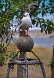 Seagul on a Lobster Pot at Kekerengu Beach Royalty Free Stock Images