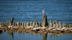 Seagul op rots door overzees mooi natuurlijk landschap royalty-vrije stock fotografie