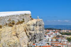 Seagul på en klippa arkivbilder