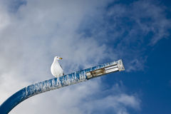 Seagul on Pole Stock Photos