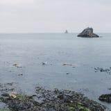Seagul and sailboat share the sea Royalty Free Stock Photo