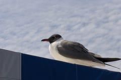 Seagul se reposant sur l'auvent du bateau de visite photo libre de droits