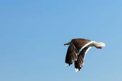 Seagul seaside bird on blue sky background Stock Photo